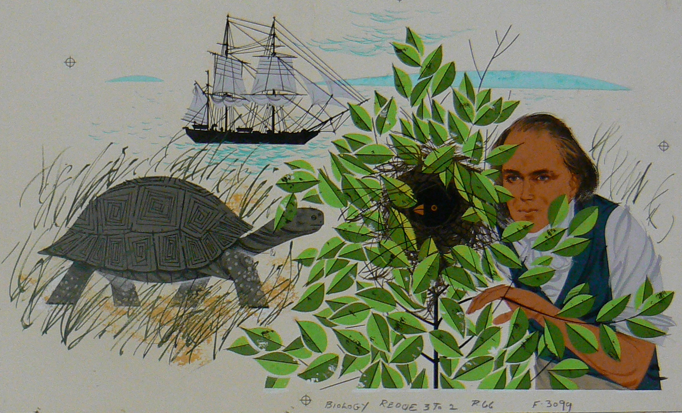 Young Charles Darwin in the Galapagos Islands